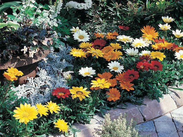 Sun-loving Plants